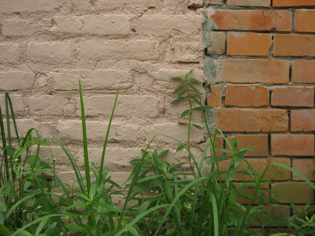 wall 29