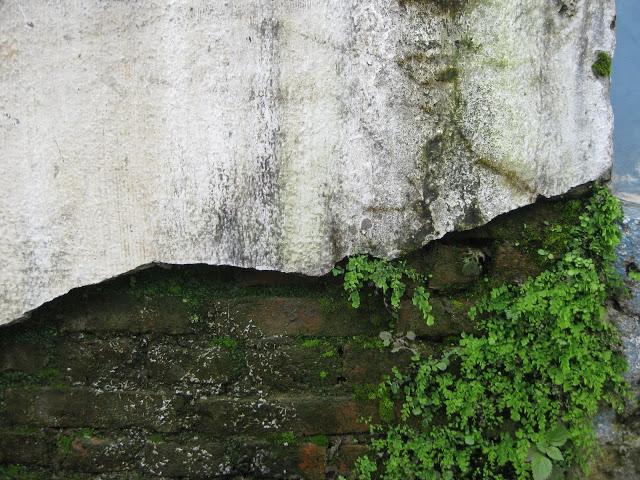 wall 31