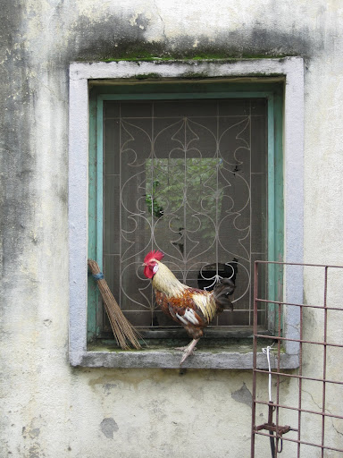 rooster window