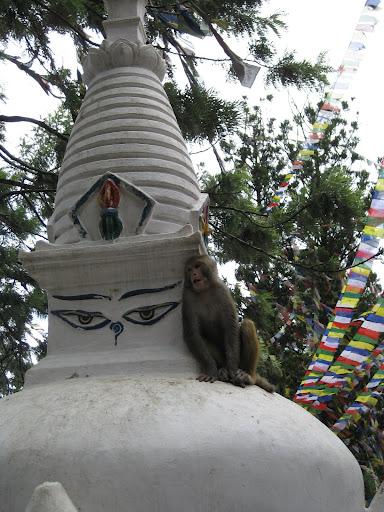 stupa monkey