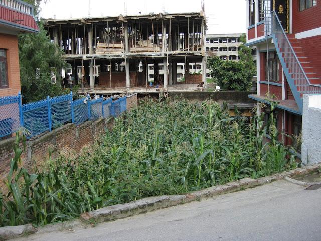 vacant lot 3