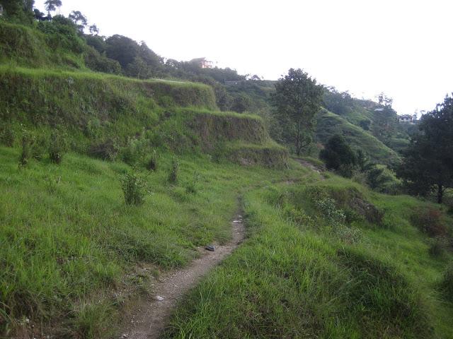 Local's path